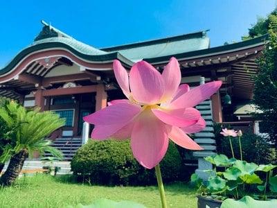 天童山 大雄院さんのプロフィール画像