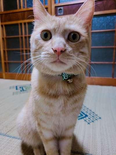 三輪 智美さんのプロフィール画像