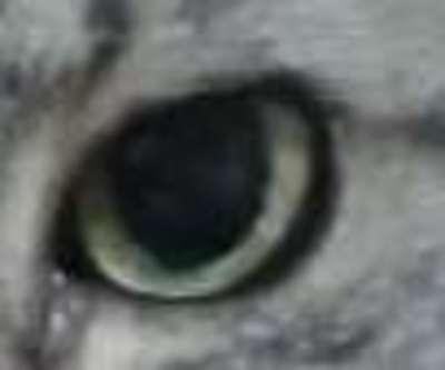月雪さんのプロフィール画像