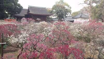 道明寺天満宮さんのプロフィール画像